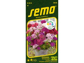 62309 1 hvozdik bradaty fragrance mix 0 5g serie kolekce kvetiny k rezu