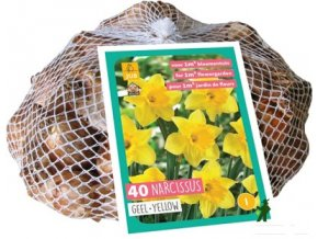 63812 narcis yellow xxl sitka 40cibuli