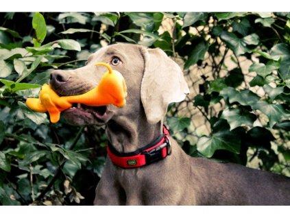 Lanco pets - Hračka pro psy - Aportovací hračka pejsek