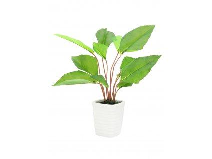 Vějířovitá rostlina, 45 cm
