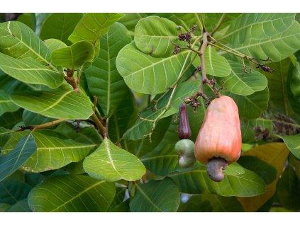 CVIČINKA Kešu ořechy 50g