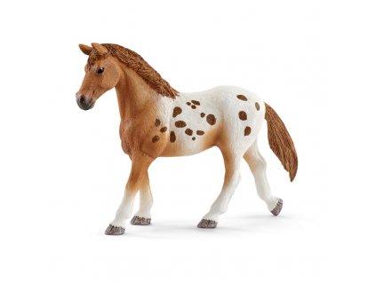 Set appalosští koně a tréninkové příslušenstí