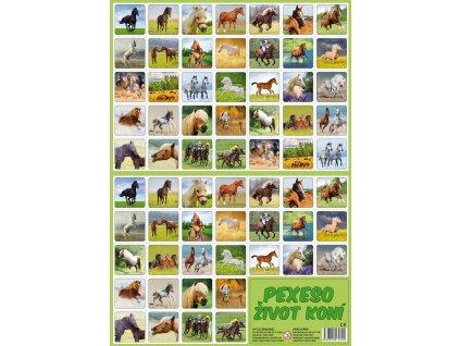 Pexeso Život koní