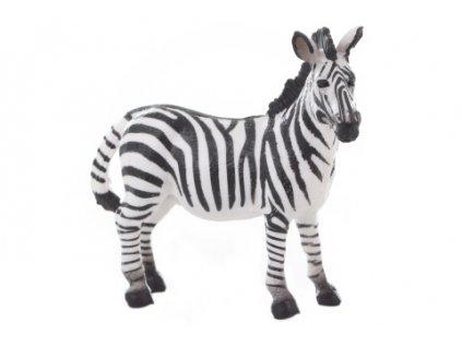 Zebra 10 cm