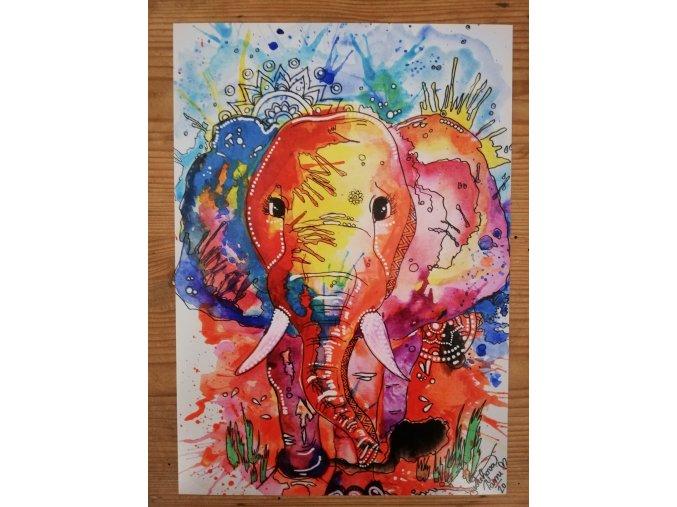 Reprodukce - Sloní slečna - plakát