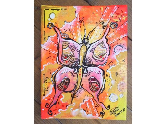 Motýl slunce