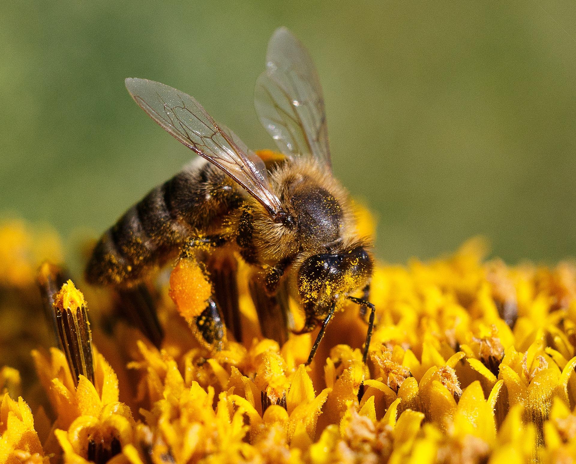 Jak včelky staví své pokojíčky