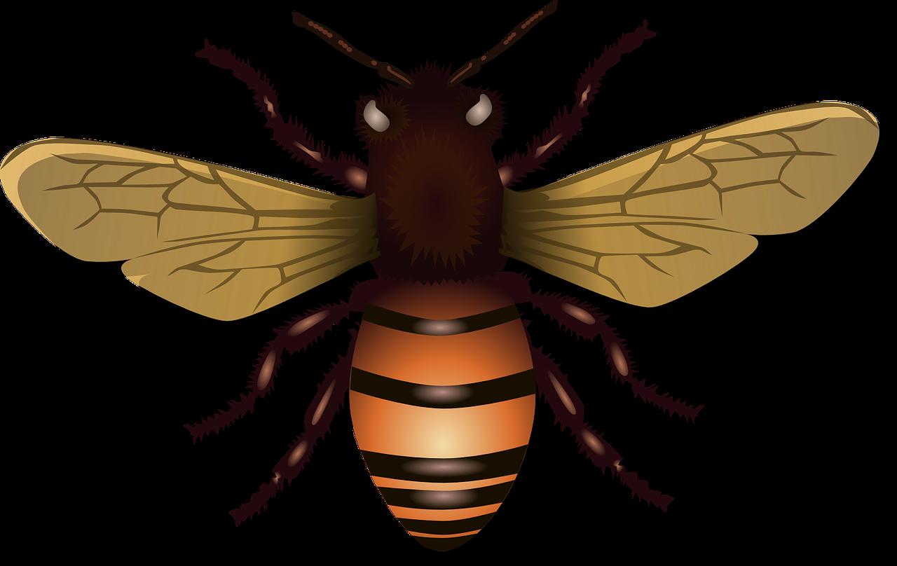 Na co se těší mladé včelky - pohádka