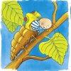 vyvoj motyla dřevěné puzzle naučné