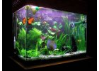 Sladkovodní a mořská akvária
