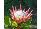 Botanika a pěstitelství