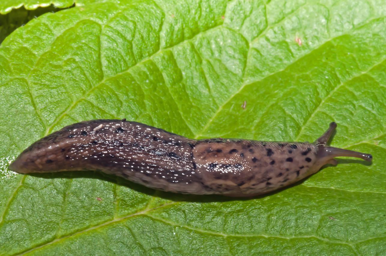 Aktuální informace o výskytu škodlivých organismů