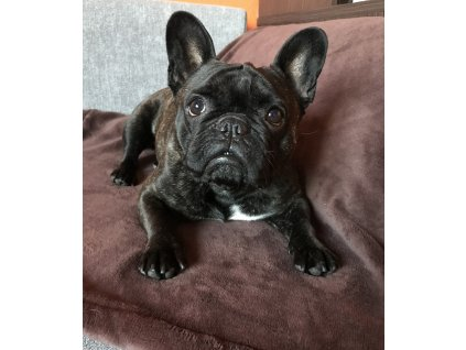 Fleecová deka pro psa