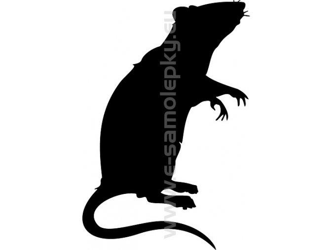Samolepka - Potkan