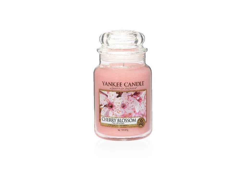28946 YC velká Cherry Blossom