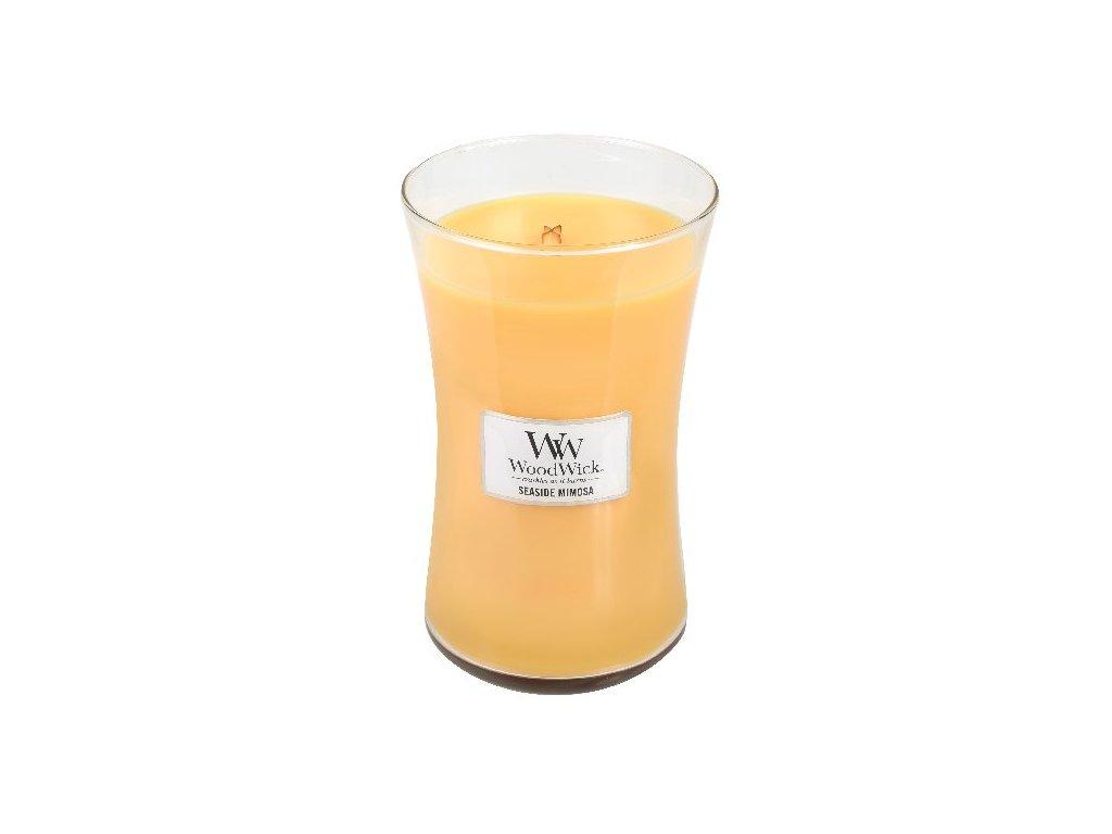 31958 WW velká Seaside mimosa