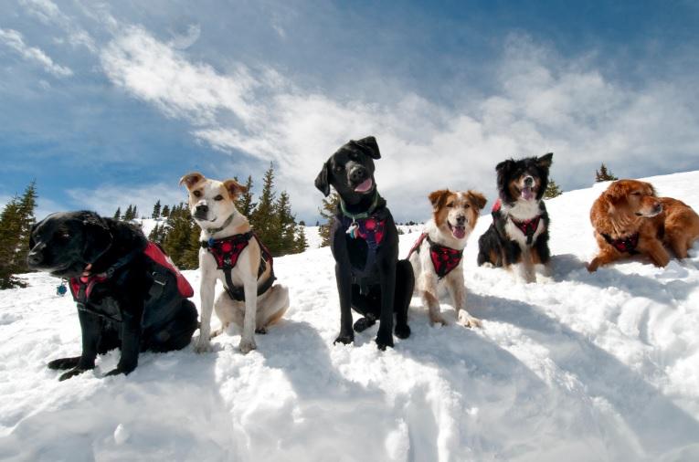 Co nezapomenout, když jedete se psem na hory?