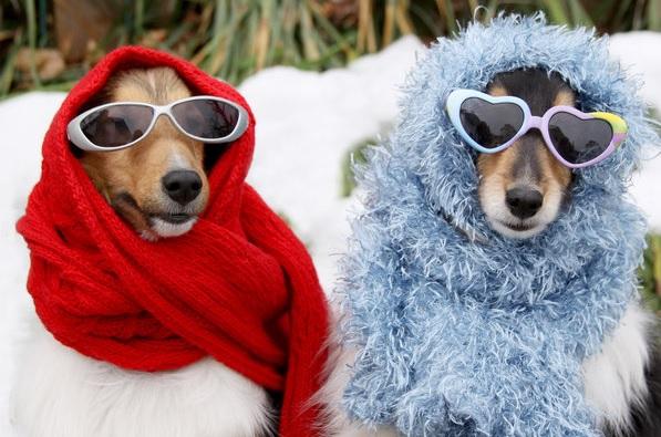 4 praktické tipy, jak vybrat správný obleček pro psa