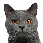 Granule pro dospělé kočky