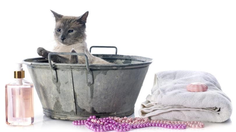 Kosmetika a péče pro kočky