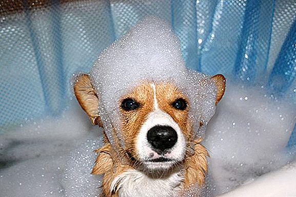 Kosmetika a péče pro psy