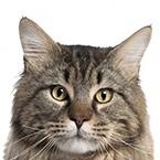 Krmivo pro starší kočky
