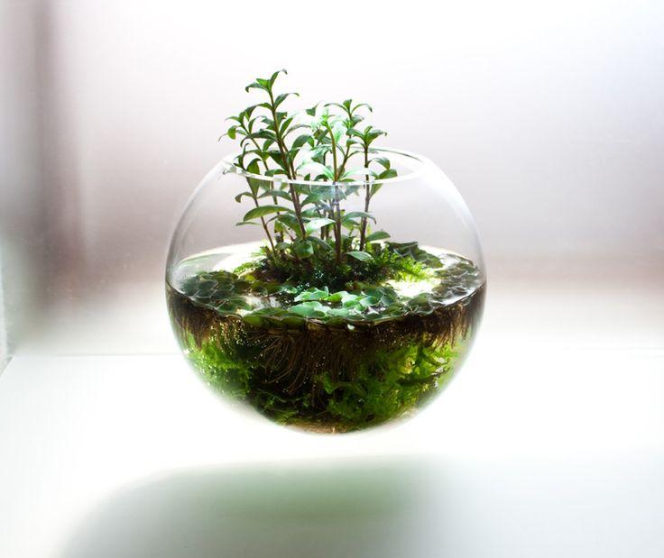 505dc63945e325cd2e613e8fba2341e7--water-plants-water-garden