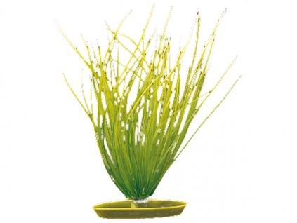 Hagen rostlina Hairgrass 20 cm