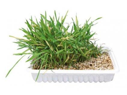 Trixie kočičí tráva ve vaničce 100 g