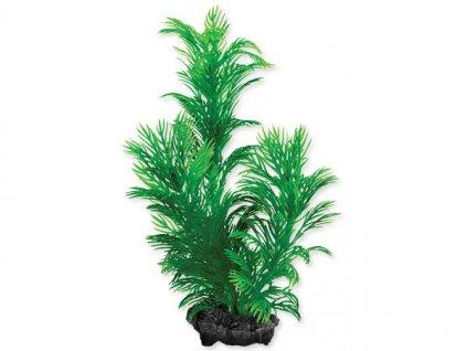 0198629 rostlina tetra green cabomba s