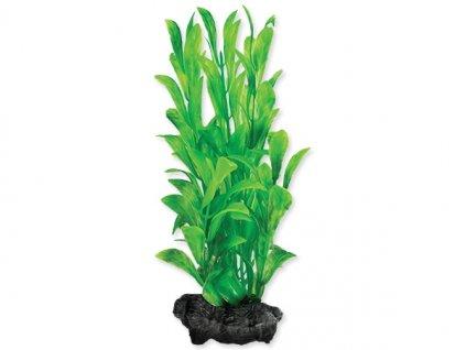 0051414 rostlina tetra hygrophila s