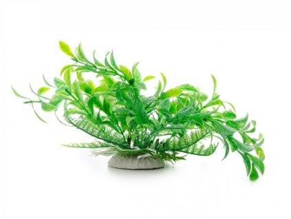 jk animals akvarijni rostlinka ludwigia zelena 14 17 cm 1