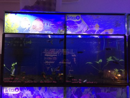 7702 bazar akvarium 230 l 2 sekce