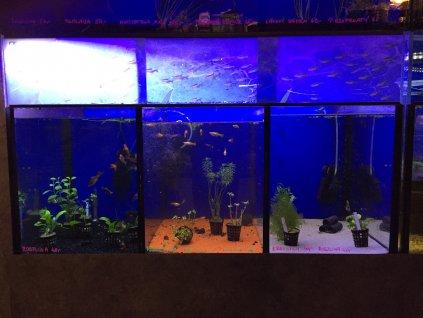 7705 bazar akvarium 230 l 3 sekce