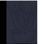 Šťáva z aloe vera