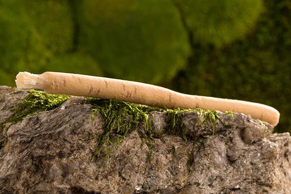 Siwak: 3 tajomstvo prírodnej zubnej kefky