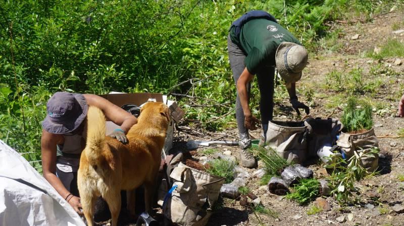 Další stromy zasazeny opět v Amazonii