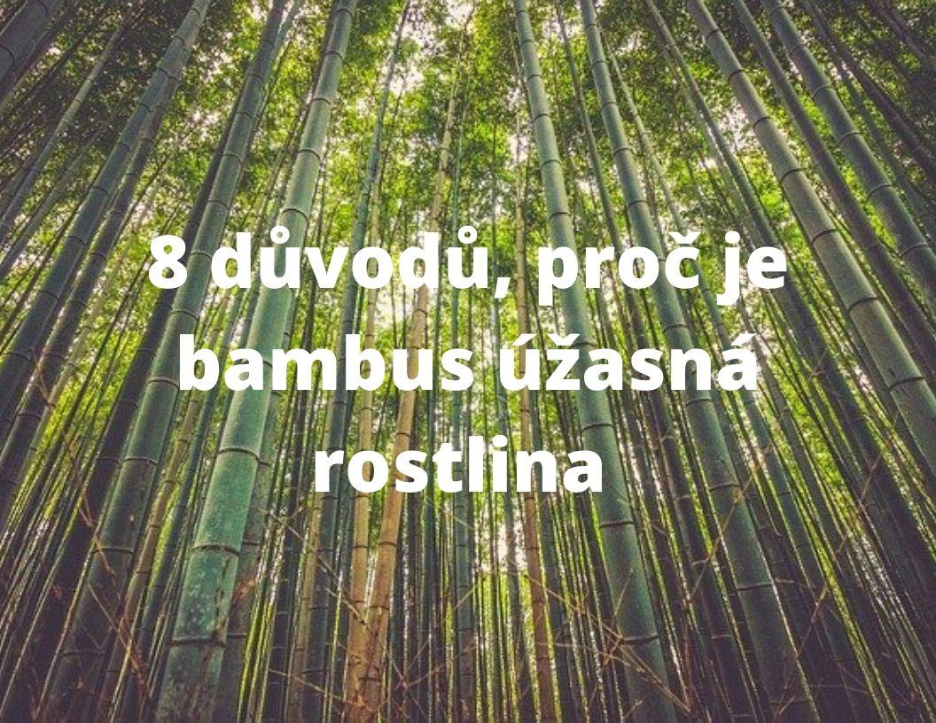 8 důvodů, proč je bambus úžasná rostlina