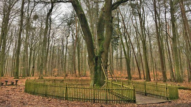 Jediný strom na světě s vlastní adresou