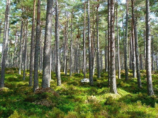 16 důvodů, proč jsou pro nás stromy tak důležité.
