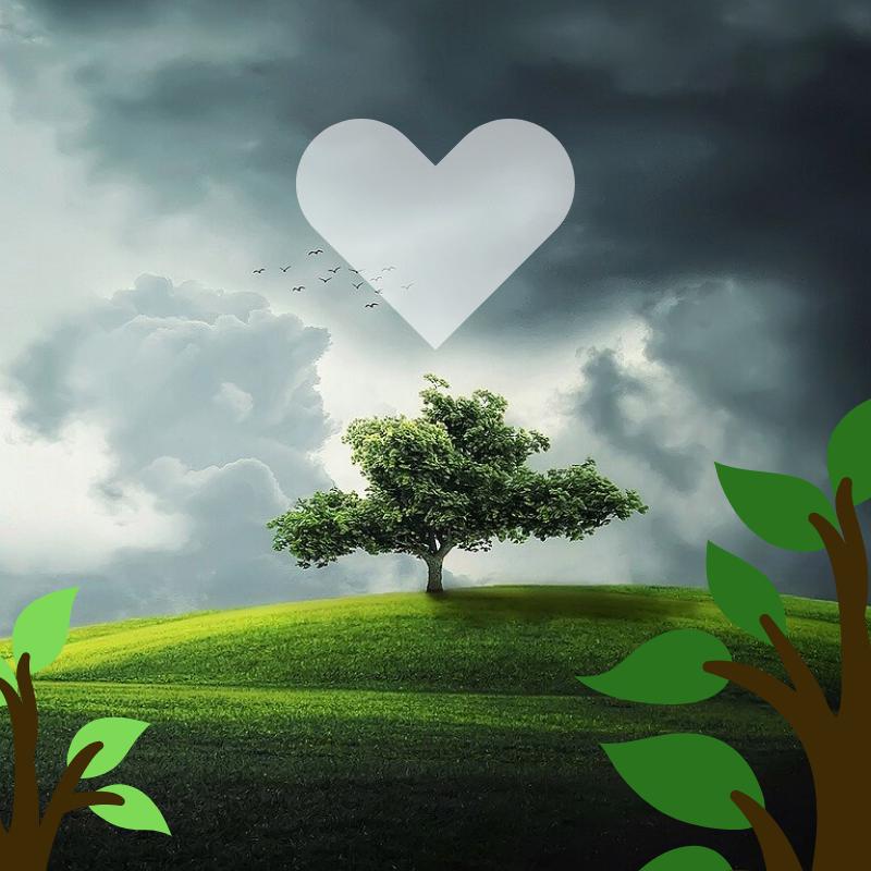 Význam stromů pro člověka. I jen jeden strom dokáže zázraky!