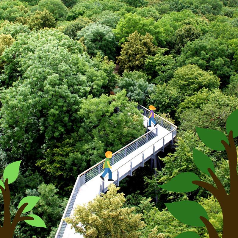 Tip na výlet: stezky korunami stromů napříč celou Českou republikou