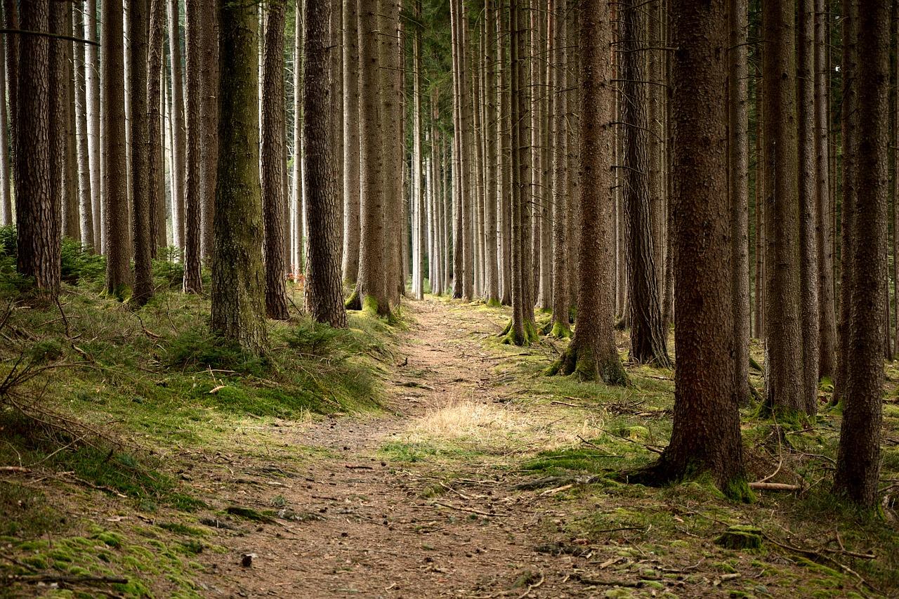 Jak je to s výsadbou stromů v Česku?