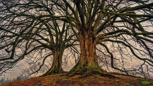 Nejstarší stromy světa a u nás v Česku