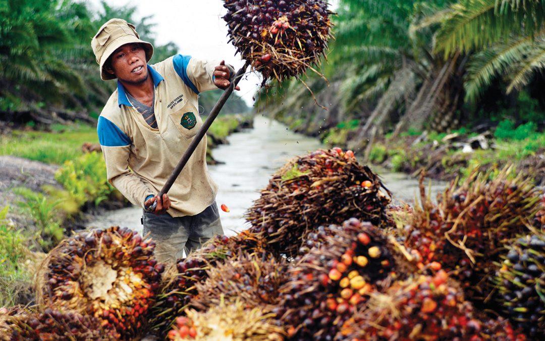 10 každodenních věcí, které obsahují palmový olej