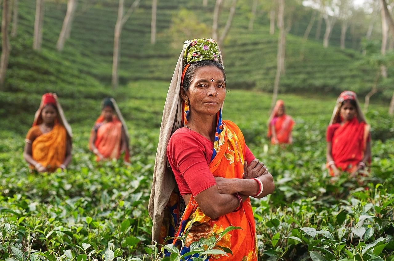 earthkarma výsadby Indie