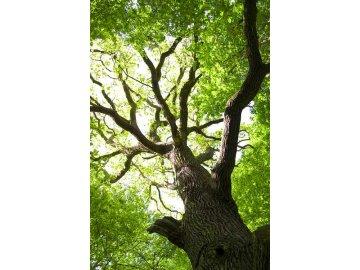 Dubové dřevo (Oak wood) - Příchuť Flavour Art