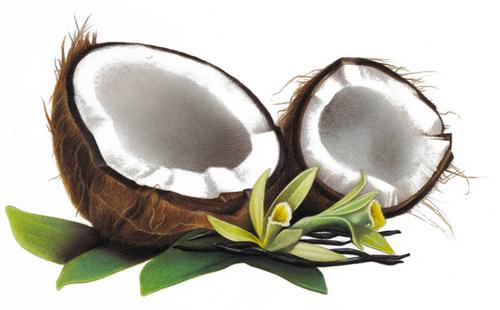 Solub Arome Francie Solub Arome - Vzorky příchutí 1,5ml - Sladké Kategorie: Sladké, Příchuť: Příchuť vanille coco, Množství: 1,5ml