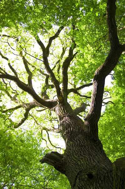 Dubové dřevo (Oak wood) - Příchuť Flavour Art Kategorie: Ostatní, Příchuť: Ostatní - Dubové dřevo (Oak wood), Množství: 10ml