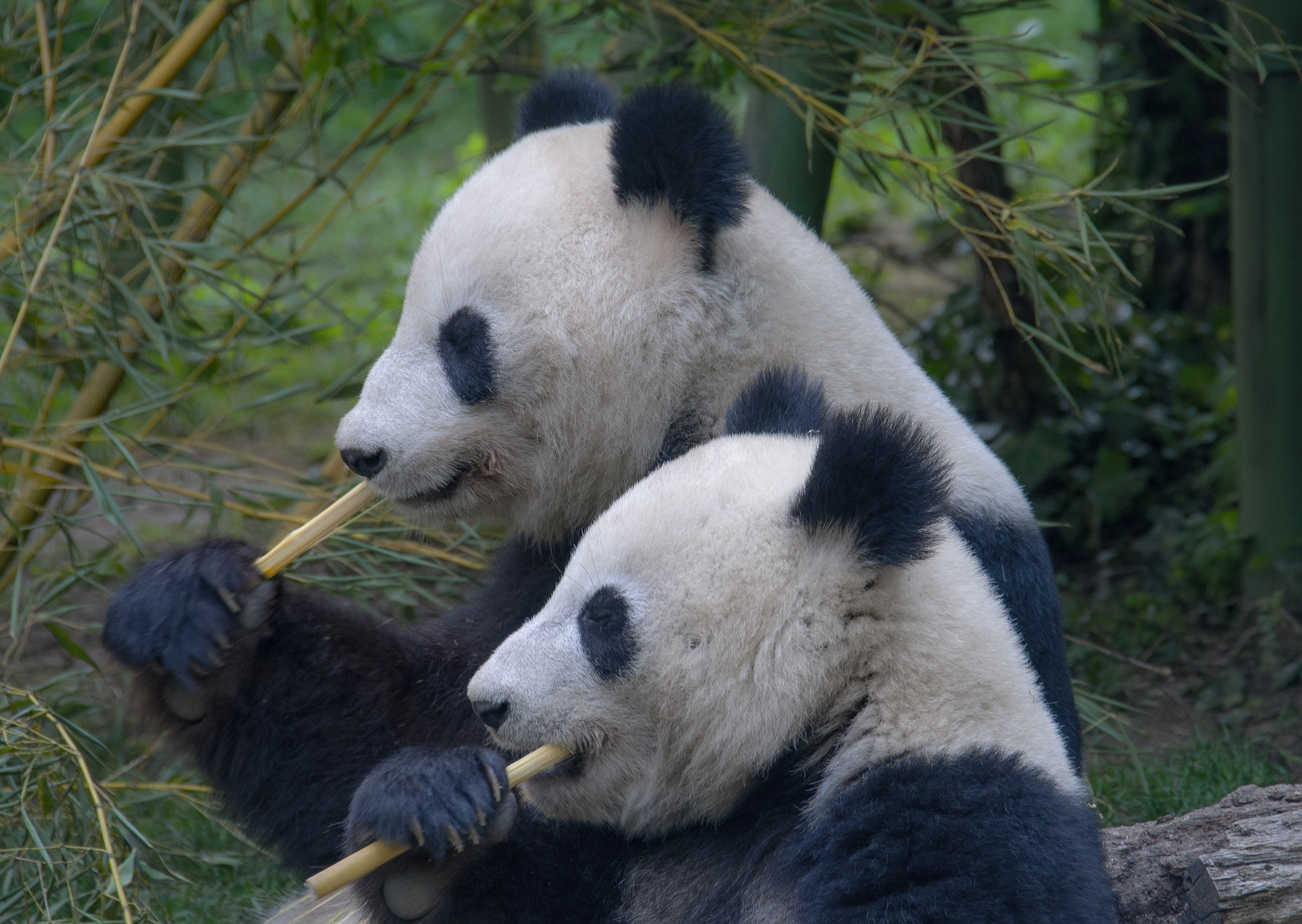 Příběh bambusového brčka